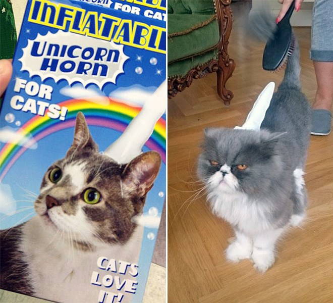 funny pet products inflatable unicorn horn for cats | Anchie MeTce INFLATABLE UNICORN CATS! HORN INFLATABLE UNICORN HORN CATS! CATS LOVE !
