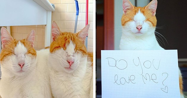 cats blind beautiful instagram aww cute love vids pics animals   adorable white cat with orange ears and no eyes sitting behind a sign that reads DO YOU LOVE ME