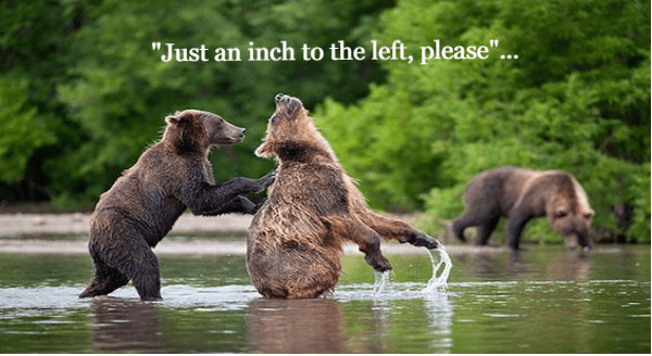 Funny Photos Of Bears Acting Suspiciously Like Humans | Just an inch to the left please cute funny pic of two bear standing upright in knee high water with one scratching the other's back
