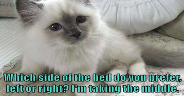 lolcats funny cat memes cats lol aww cute animals | tebook Secr Which side bed do prefer, left or right talking middle. tiny white kitten with grey face