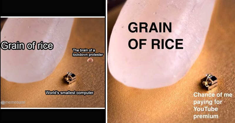 Funny dank memes showing a grain of rice next to the world's smallest computer | Grain rice brain lockdown protester World's smallest computer @memebase | GRAIN RICE Chance paying YouTube premium