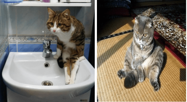 Awkwardly Sitting Cats | cute cat sitting on a sink like a person with its feet hanging down | funny grumpy looking cat sitting on its butt in a spot of sunlight