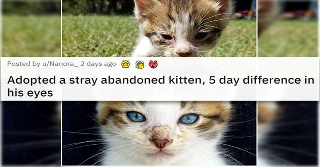 adopt cats dogs rescue adopted aww animals pets wholesome uplifting rescue shelter | Posted by u/Nanora_ 2 days ago Adopted a stray abandoned kitten, 5 day difference in his eyes