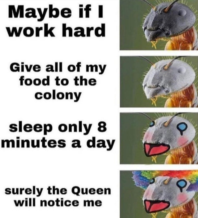 top ten 10 dank memes daily | clown ant simp Maybe if work hard Give all my food colony sleep only 8 minutes day surely Queen will notice