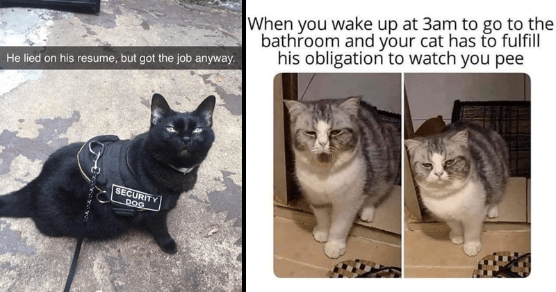 Funny memes, cat memes, cute memes, cute cat memes, pet memes, dank memes | police cat He lied on his resume, but got job anyway. SECURITY DOG | tired looking cat wake up at 3am go bathroom and cat has fulfill his obligation watch pee