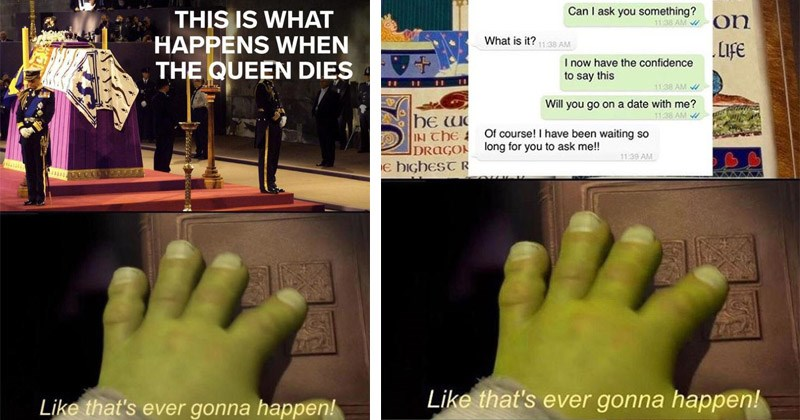 "Funny memes featuring Shrek, entitled, ""Like That's Ever Gonna Happen"" 