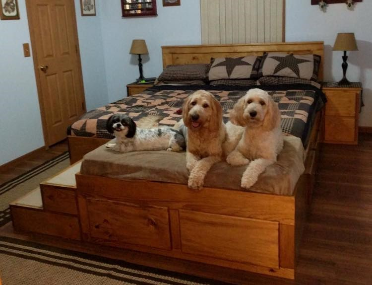 Furniture Manufacturer Creates Wooden Bed Frame With Built-In Bed For Your Pet | three cute dogs sitting side by side on a couch attached to the foot of a bed with stairs leading up to it
