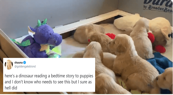 Dragon Reading a Bedtime Story To Adorable Puppies | here's a dinosaur reading a bedtime story to puppies and I don't know who needs to see this but I sure as hell did stuffed toy plushie cute adorable puppies