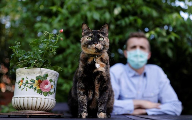 covid 19 coronavirus cat survive infected france cats animals | cute cat with spots and a cat shaped pendant on its collar sitting beside a potted plant in front of a man in a face mask
