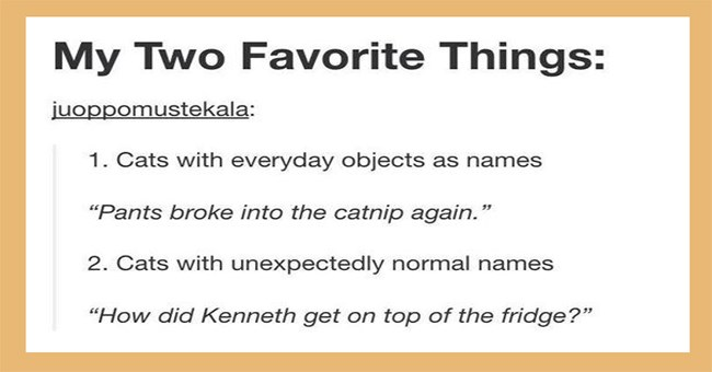 Tumblr posts about cats | My Two Favorite Things: juoppomustekala: 1. Cats with everyday objects as names Pants broke into catnip again 2. Cats with unexpectedly normal names did Kenneth get on top fridge?