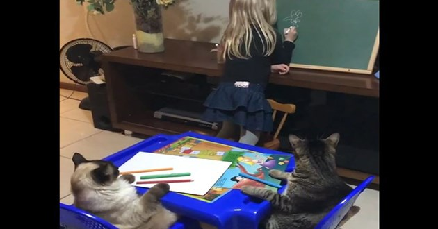 adorable cats girl teaching drawing video aww cute animals kids | two cats sitting on chairs at a children kids table in front of pens and paper while a little girl writes on a blackboard classroom