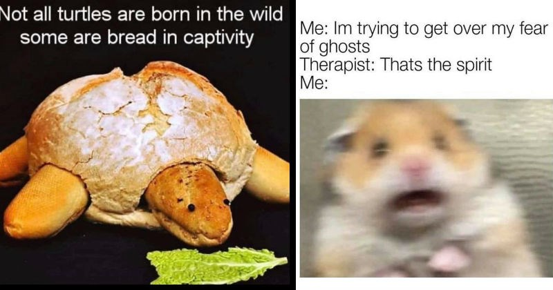 Silly puns and wordplay memes | turtle made of bread and baguette eating lettuce Not all turtles are born wild some are bread captivity | scared hamster Im trying get over my fear ghosts Therapist: Thats spirit :