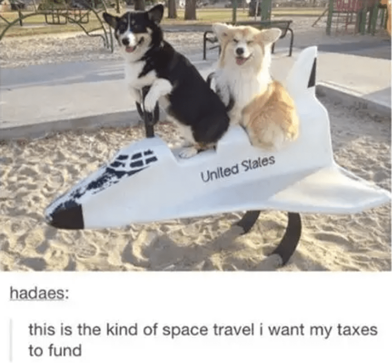 Just a Bunch Of Corgi Posts To Celebrate Their Special Day | United Slates hadaes: this is kind space travel want my taxes fund two cute dogs riding an aircraft plane spring rider rocker
