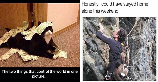 caturday funny cat memes cats animals lol cute aww | cat covered in money bills two things control world one picture | Honestly could have stayed home alone this weekend cat strapped to a mountain climber's backpack