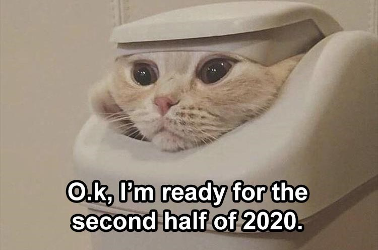 Fresh animal memes | O.k, P'm ready second half 2020. cat looking out from inside a trash bin can
