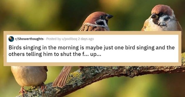 shower thoughts reddit top rated askreddit best of week thoughts | r/Showerthoughts Posted by u/podiboq 2 days ago Birds singing morning is maybe just one bird singing and others telling him shut f up