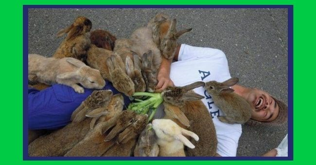 true happiness little things finding imgur reddit cure heartwarming pics wholesome | pack of rabbits bunnies eating a vegetable from a man's chest as he's lying on the ground