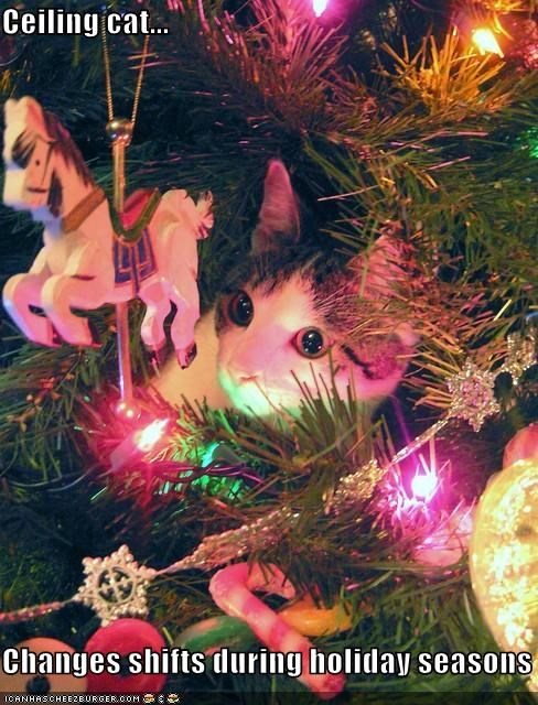Ceiling Cat Changes Shifts During Holiday Seasons