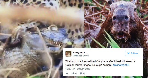 twitter planet earth FAIL scared reactions shocked animals