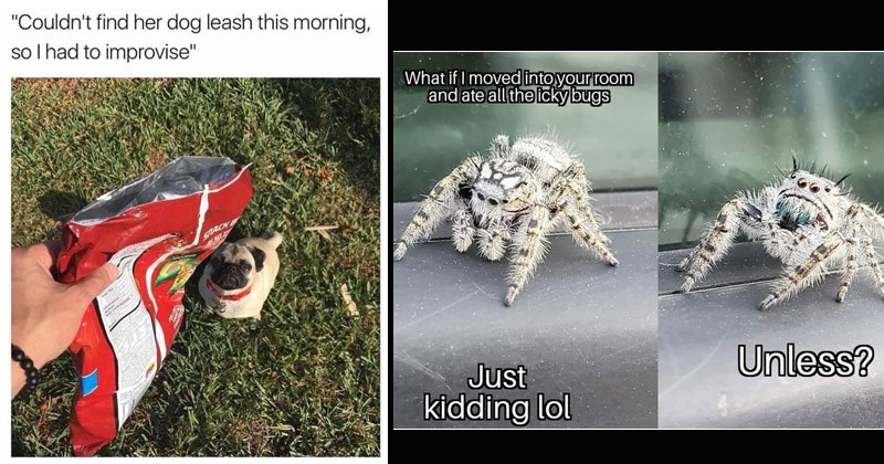 Funny random memes | Couldn't find her dog leash this morning, so had improvise pug dog doritos bag | if moved into room and ate all icky bugs Unless? Just kidding lol spiders