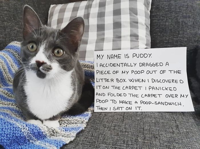 funny pics of pets being shamed for their wrongdoings | MY NAME IS PUDDY ACCIDENTALLY DRAGGED PIECE MY POOP OUT LITTER BOX DISCOVERED ON CARPET PANICKED AND FOLDED CARPET OVER MY POOP MAKE POOP-SANDWICH. THEN SAT ON .