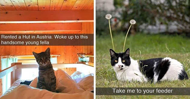 cats snaps snapchat funny cute aww animals lol | cute cat sitting on a bed Rented Hut Austria. Woke up this handsome young fella | Take feeder cat sitting in front of two flower stems looking as if it has alien antennas