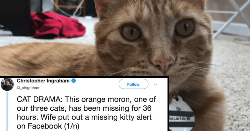 A fun Twitter thread about a wild dude and his cat | tweet by Christopher Ingraham Follow @_cingraham CAT DRAMA: This orange moron, one our three cats, has been missing 36 hours. Wife put out missing kitty alert on Facebook (1/n) Red Lake Fals V