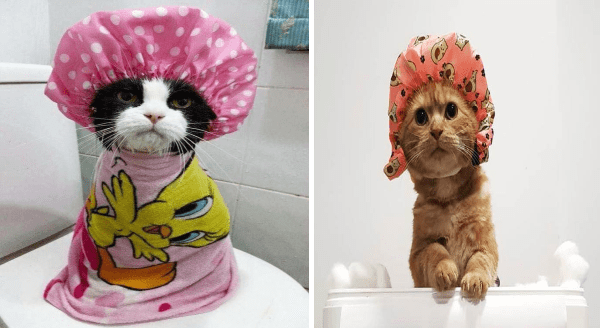 cats wearing shower caps | cute black and white cat wrapped in a Tweety bird towel and wearing a polka dot pink shower cap | orange cat climbing out of a box with an avocado shower cap on its head