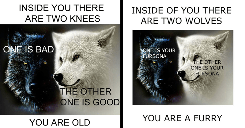 "Funny ""inside you there are two wolves memes"" 