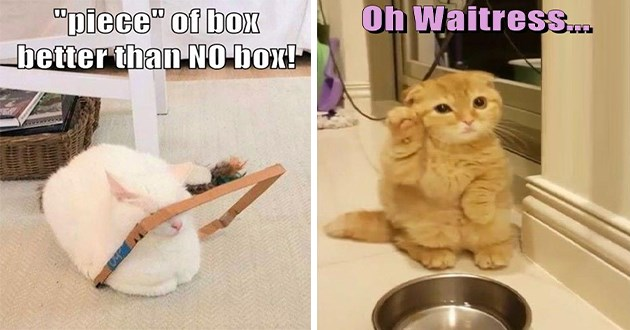 lolcats cats memes funny lol aww cute animals | piece box better than NO box! cat sitting in a thin frame of a cardboard box | Oh Waitress. cute orange cat sitting beside an empty food bowl raiding a paw as if calling for service at a restaurant