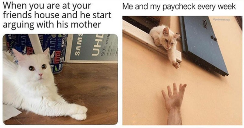 caturday cats funny memes cat tweets pics animals aww cute | are at friends house and he start arguing with his mother 50 6SERI SAWVS LL OVER ROL VER white cat crossing its paws and looking to the side | and my paycheck every week @petwineshop cat reaching down from a window to a person's extended arm