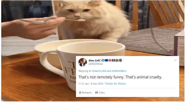 Owner Who Gave His Cat Ice Cream Is Being Accused Of Animal Cruelty | white cat being fed with a spoon and tweet that reads Thar's not remotely funny. That's animal cruelty.