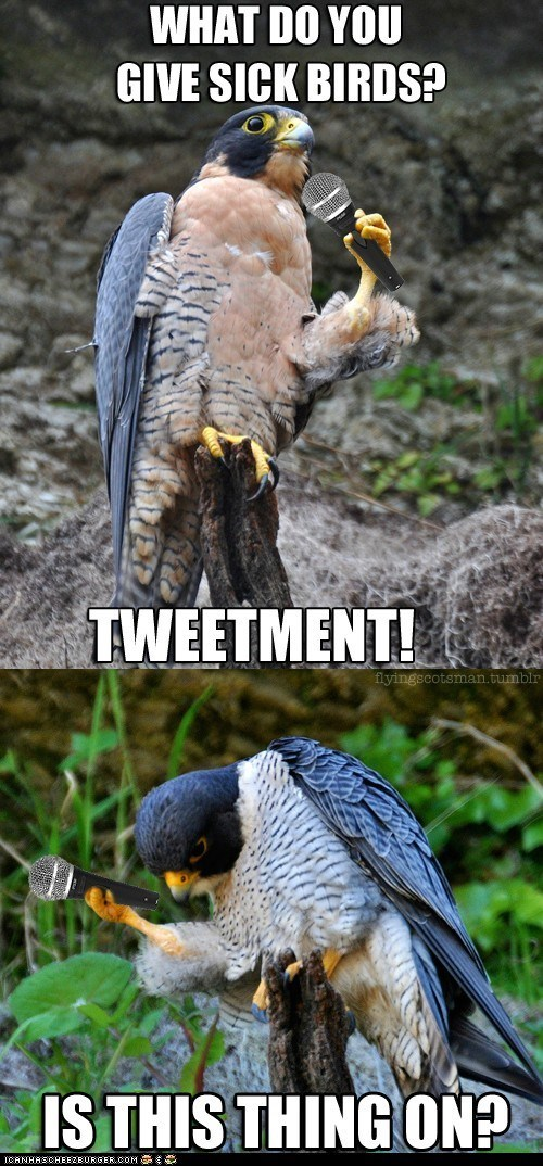 bunch of funny and punny bad jokes | Bird - DO GIVE SICK BIRDS? TWEETMENT! flyingecotsman.tumblr IS THIS THING ON? ICANHASCHEEZEURGER.COM