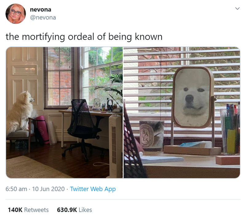 Pets Discovering Themselves In Mirrors | nevona @nevona mortifying ordeal being known cute samoyed white dog sitting on a chair looking in a small mirror | orange cat looking surprised at its own reflection in a mirror