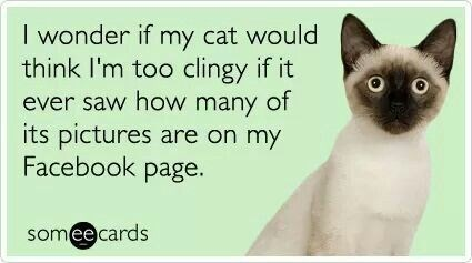 Confessions by cat owners | wonder if my cat would think too clingy if ever saw many its pictures are on my Facebook page. some e cards Siamese cat