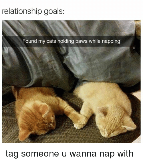 relationship memes and tweets cute and sappy loving couple dating marriage life | relationship goals: Found my cats holding paws while napping tag someone u wanna nap with