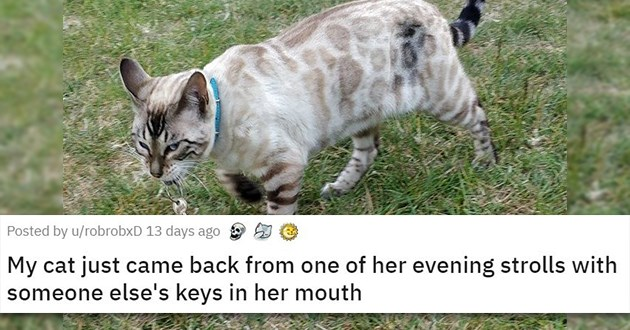 bad troublemaking pets funny lol animals cats dogs cute aww jerks adorable | grey cat with spots walking in grass My cat just came back from one of her evening strolls with someone else's keys in her mouth