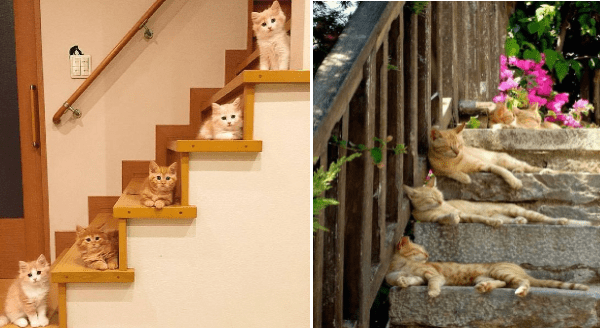 Cats Laying On Staircases | five adorable orange and cream kittens each occupying a different step in a wooden staircase | four ginger cats sleeping napping on stone steps outside