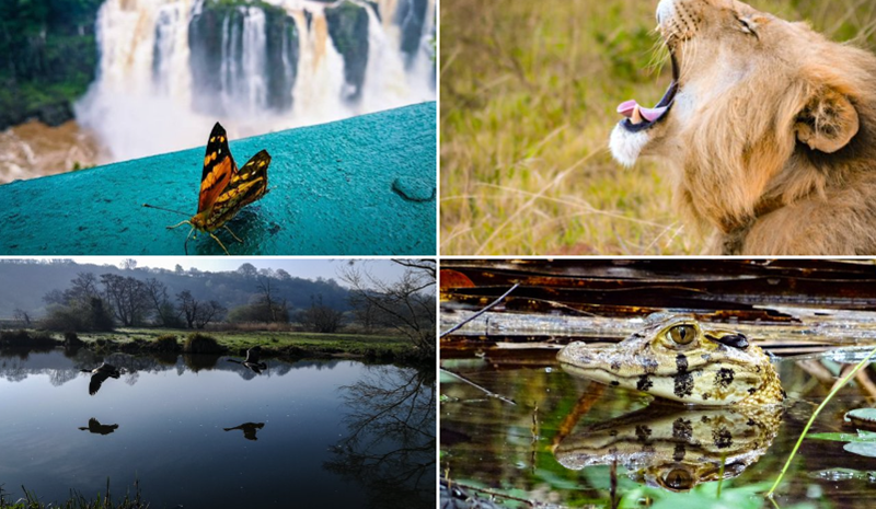 Photographers Celebrate Nature Photography Day With Glorious Images | Fiona Frances White @fionastannard 's #NaturePhotographyDay certainly no expert, but 's one my favourite things world do, so here are my 4 favourite photos taken. Guildford, England butterfly in front of a waterfall lion yawning baby alligator crocodile in a swamp