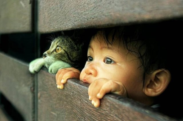 Amazing animal photos | sweet and cute picture of a young child and a cat both peeking through wooden boards with their hands and paws respectively on the lower ledge