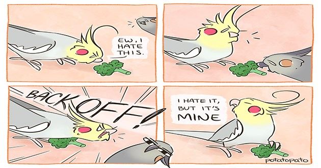 birb comics funny cockatiel birds birbs lol web instagram art artist adorable cute aww animals tumblr | illustration drawing of a two birds and a piece of broccoli EW HATE THIS. BACK OFF BUT 'S MINE potatopato