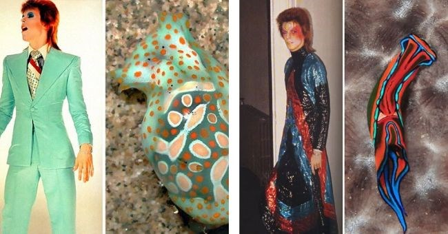 david bowie looks like sea slugs funny pics compared blog | David Bowie with a red mullet and a mint green suit next to a sea animal with similar coloring | Bowie with red face paint wearing a glittery dress in red blue and black