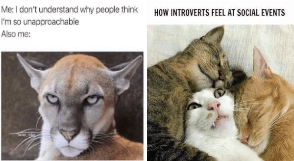 Animal introvert memes | don't understand why people think so unapproachable Also sallor_mike scary intimidating wild cat | INTROVERTS FEEL AT SOCIAL EVENTS cat looking uncomfortable while being cuddled by two other cats