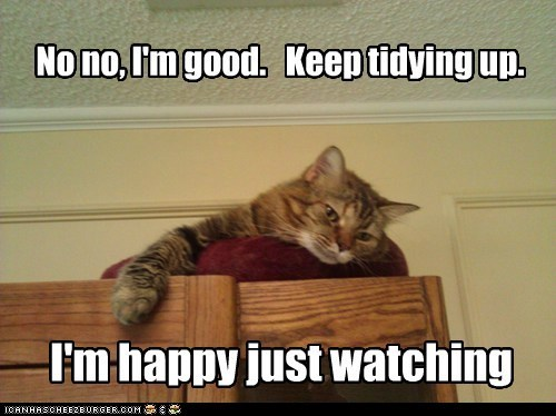 funny cat memes | Cat - No no, l'mgood. Keep tidying up happy just watching ICANHASCHEEZBURGER.COM :