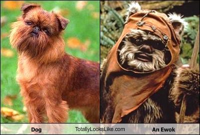 Dog TotallyLooksLike.com An Ewok