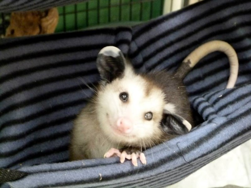 aww possums smiling cute animals smile adorable cuteness small