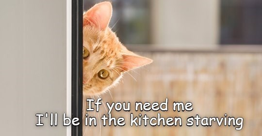 lolcats funny cat memes cats lol animals cute aww kittens | orange cat peeking out from around a door wall If need be kitchen starving