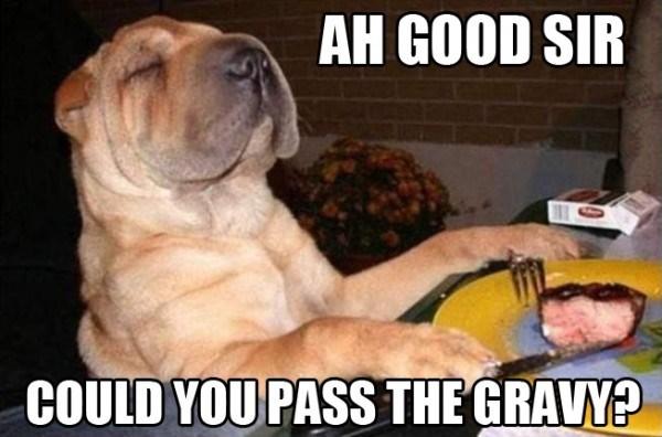 thanksgiving Memes animals - 1176581