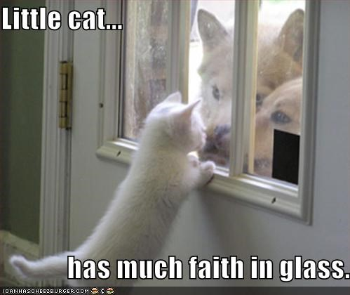 cat dogs door kitteh kitten lolcats - 117726976