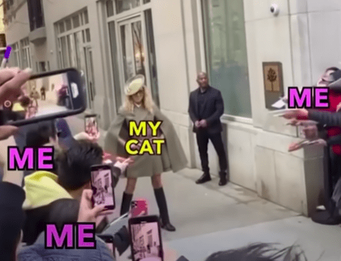 list of the top cat memes videos of the week | woman standing and the crowd is taking photos of her comparing it to a cat getting its picture taken by the owner